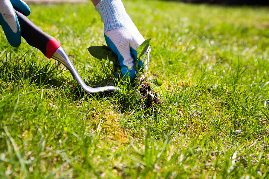 Call Total Lawn Care for pest and weed control